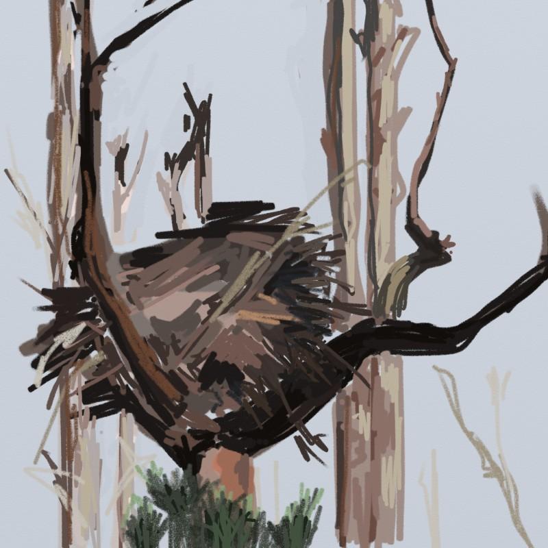 nesting on Horn Island